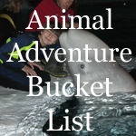 Animal Adventure Bucket List