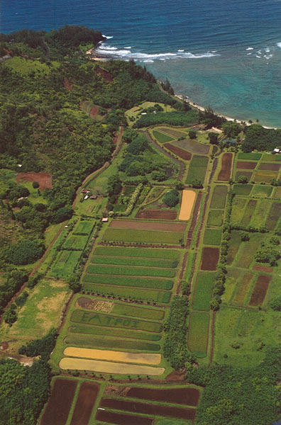 Helicopter tour in Kauai, Hawaii: view of Poi fields