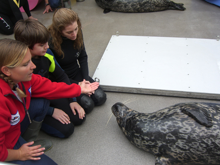 Watching a seal training session during our Marine Mammal Keeper Experience at SeaWorld